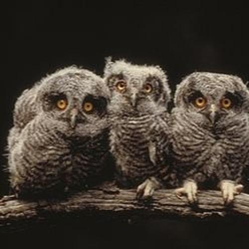 Ornithology (Mix 1)