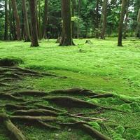The Gardens of Shining Moss (2017 Remix)