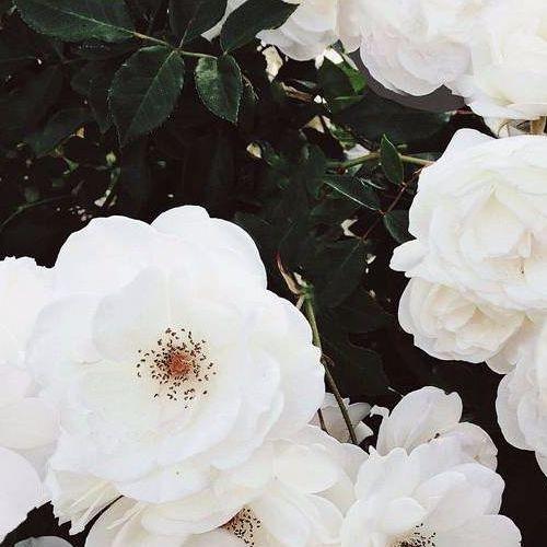 Cette Fleur N'est Pas La Mienne