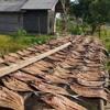 Download Mp3 Harga Garam Mahal, Banyak Perajin Ikan Asin di Kalbar Berhenti Produksi