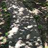 Sidewalk Eclipse