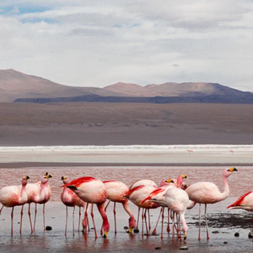 Line Base Salar de Uyuni Bolivia Flamengos