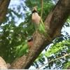 Parakeet on a Tree