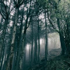 In The Dark Woods (2017)