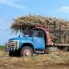Camions surchargés de canne à sucre : l'insouciance totale des chauffeurs