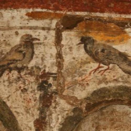 Subterranean Starling