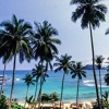 Freezing Pints Under A Coconut Tree Mix