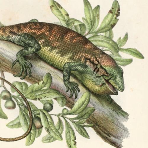 Chameleonlike Skin Colour