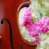 All shall be Well - Words: Julian of Norwich; Music: May Robertson (baroque violin and voice)
