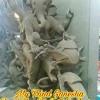 Dj wale babu ganesh ji Dj Satish Amre 9009512221 Bilawar kala jno cwa