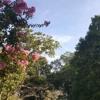 [UTAU Original] so-long, long gone [Chasing Constellations ft. Trina Wylington VCCV]