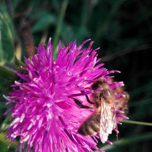 Sonic Pollinators Snippet by Karen Power