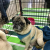 139: Bay Area Pet Fair Highlights, Part 2, in Pleasanton, California