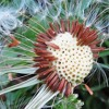 The Intelligence Of The Dandelion Seed