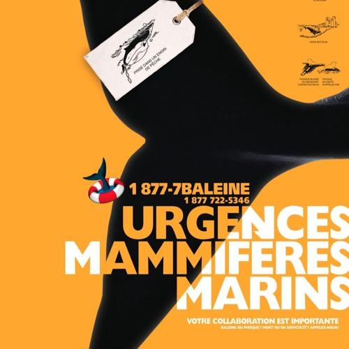 Entrevue avec Josiane Cabana, coordonnatrice du centre d'appels d'Urgences Mammifères Marins