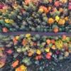 fall mix '17