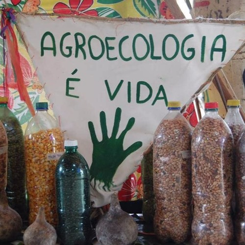 Agroecologia vai além da produção de alimentos orgânicos, explica dirigente do MST