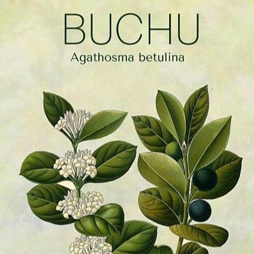Discovering Buchu