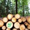 WDR5 Leonardo | Mode aus Holz | Nachhaltig oder Marketingtrick?