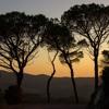 Elder Tree | Theta Wave Binaural Beats Music | Deep Meditative | Relaxation & Healing