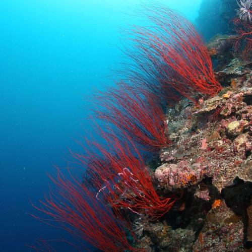 Kai Beckman & Ohm-N-I - Coral Reef