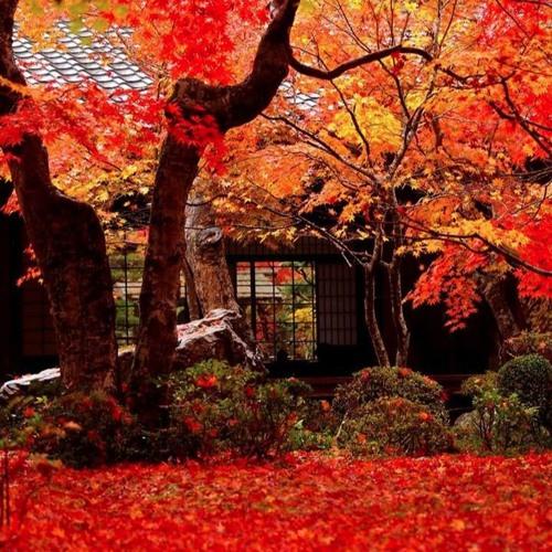 Autumn Dusk for String Quartet
