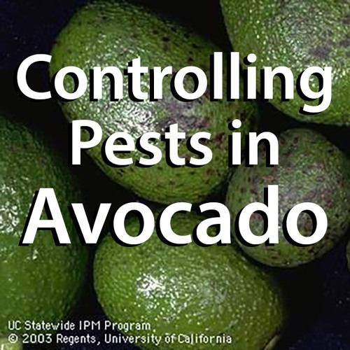 Controlling Pests in Avocado - Roundtable Meeting