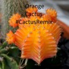 Post Malone ft. 21 Savage - Rock Star #CactusRemix