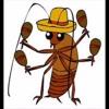 Week 4 - What's a Cucaracha