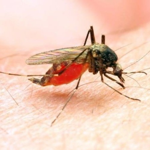 Episode 812 - How Scientists Created a Deadly Potion that is Fatally Attractive to Mosquitoes