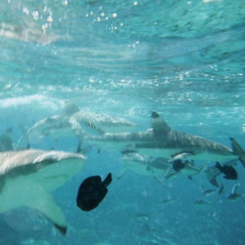Ocean Expert Danny Quintana on Shark Finning, Species Survival, Ocean Health, James Lowe Radio Show