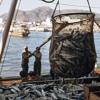 В ФАО призвали страны поддержать соглашение по борьбе с незаконным рыболовством mp3