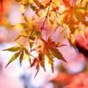 Autumn Chords