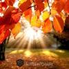 Autumn Leaf (Chart Mix)