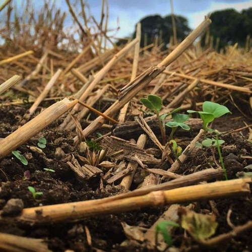 The Impact Of No Till- Farming On Soil