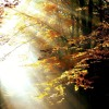 Warm Light | Alpha Wave Binaural Beats Music | Relaxation & Healing