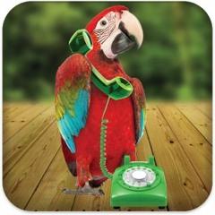 Jim Rome drops a manual bird soundbite on Aaron The Parrot