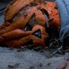 Episode 115: Halloween 3 - Season of the Witch (1982)