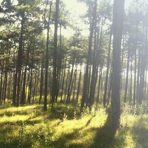 Eternal Forest