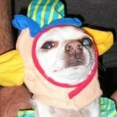 Dick Munchy The Clown Dog