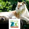 Rosette Rutten - Olmense Zoo Lied