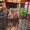 Maya Eksteen over de liefste konijnen, Kate en Anna McGarrigle