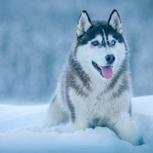 9 - 16 - 17  Flea Treatment And Dog 'winterizing'
