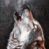 Wolves - hajrah latif