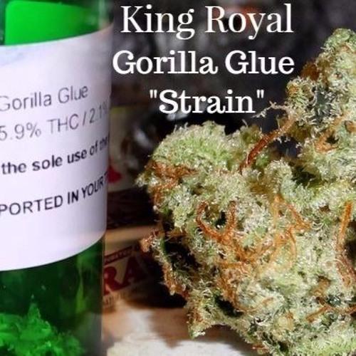 King Royal - Gorilla Glue