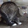 lambdashift - Come To Kitty