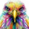 Fly Like An Eagle (unsigned)