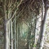 Wood Wide Web - popular science