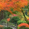 Autumn Reverie, for Flute and Piano