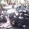 Gajah Betina Ditemukan Mati di Kebun Karet Aceh Jaya